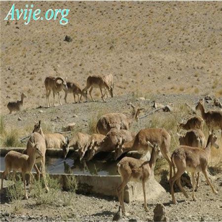 شرایط ثبت نام امریه محیط زیست اصفهان