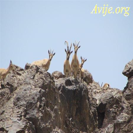 شرایط ثبت نام امریه محیط زیست کرمان